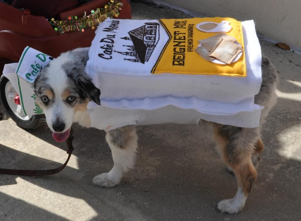 Cafe Du Monde Dog Costume Beignet Mix Mardi Gras Dog Dog