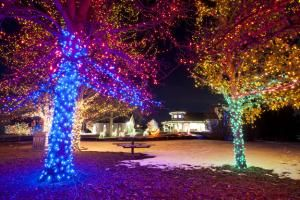Take in the sights of holiday cheer as you stroll through The Denver Botanical Garden this year! Continuing with their holiday tradition for over 25 years, the botanical garden if full of wonder and delight including a new tunnel of lights to be viewed with special 3-D glasses.