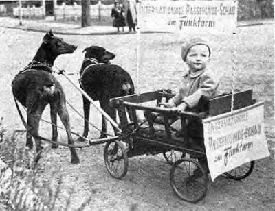 Karl Friedrich Louis Dobermann Google Search Doberman Doberman Pinscher Doggy