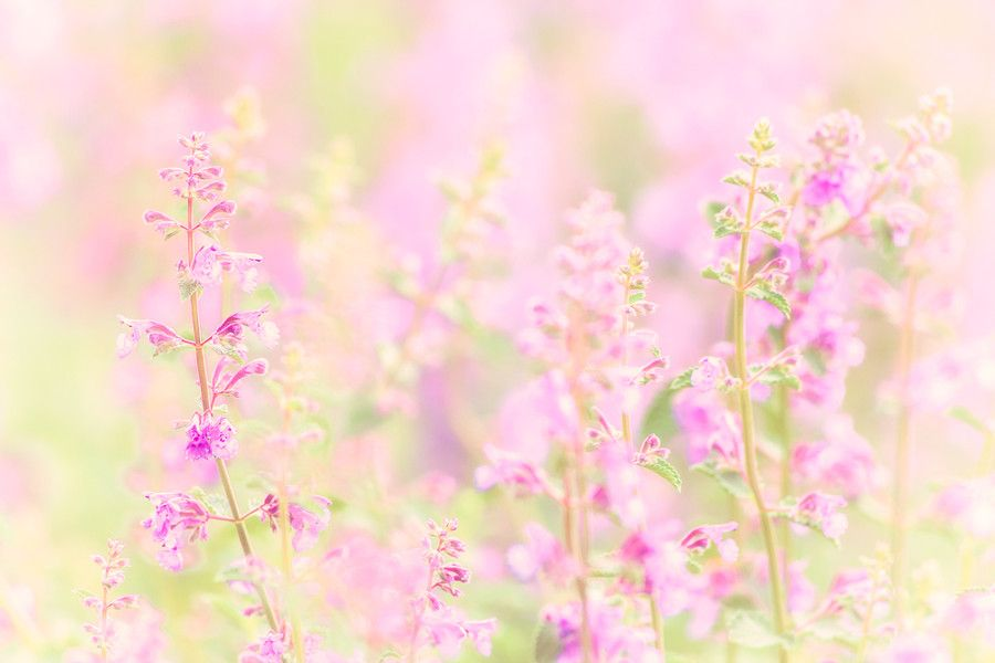 Sunny Sunday by David Kelly on 500px  vfe2805