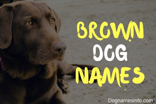 Brown Dog Names 121 Perfect Unique Name Ideas For Your Pup In 2020 Brown Dog Names Dog Names Black Dog Names