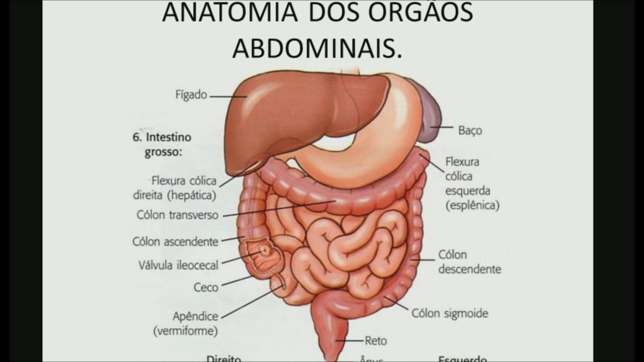 Lujo Anatomía Del Apéndice Componente - Anatomía de Las Imágenesdel ...