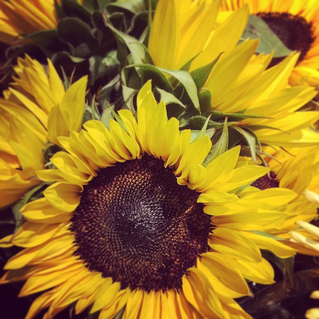Sunflowers Remind Us That The Warm Air Isn T Totally Gone