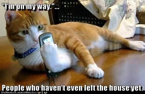 Who Texts Their Cat? #animalcaptions