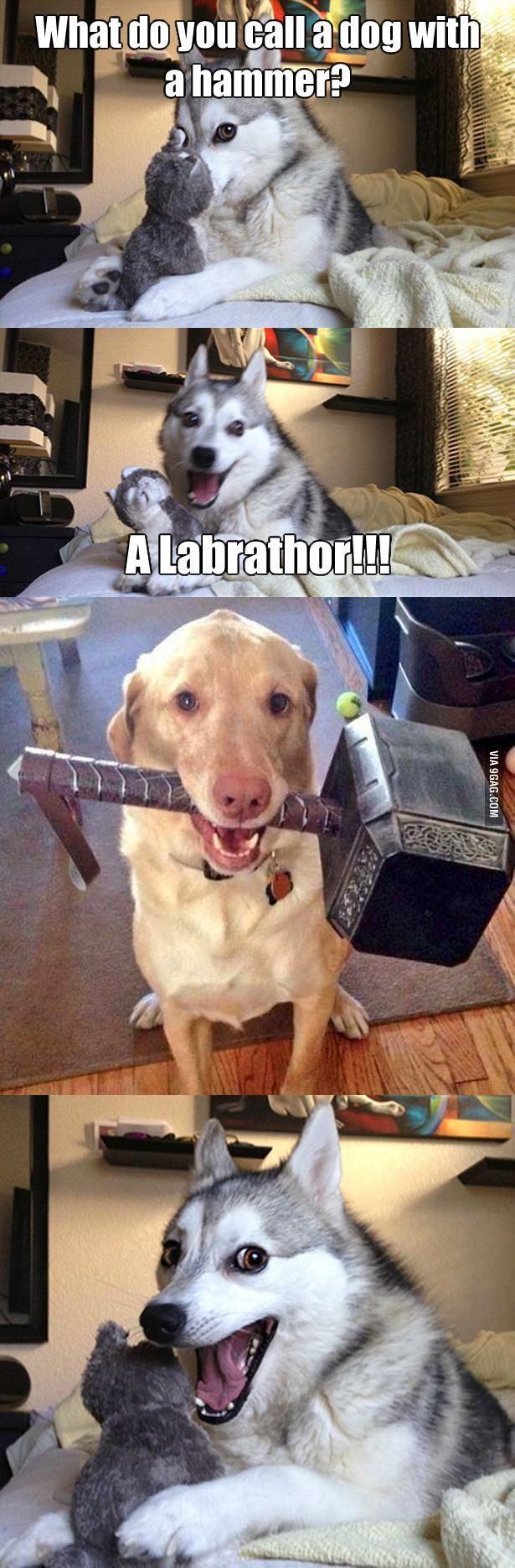 Photo of ¿Cómo llamas a un perro con un martillo? – BildersPin
