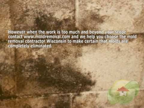 Mold Removal Contractor Wisconsin You Can Connect With Us ...