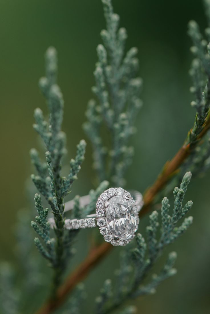 A christmas tree farm holiday engagement photo shoot in ...