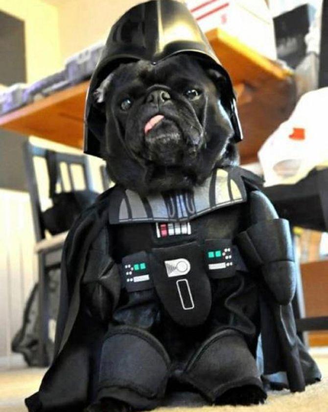 Star Wars Darth Vader Dog Costume Take My Paycheck Shut Up And
