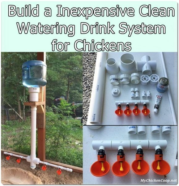 Build A Inexpensive Clean Watering Drink System For Chickens Homesteading The Homestead Survival Com Chicken Feeders Chicken Diy Chicken Watering System