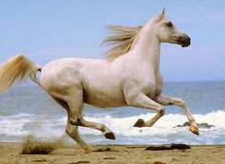 Cuadros pintura oleo caballos (3)