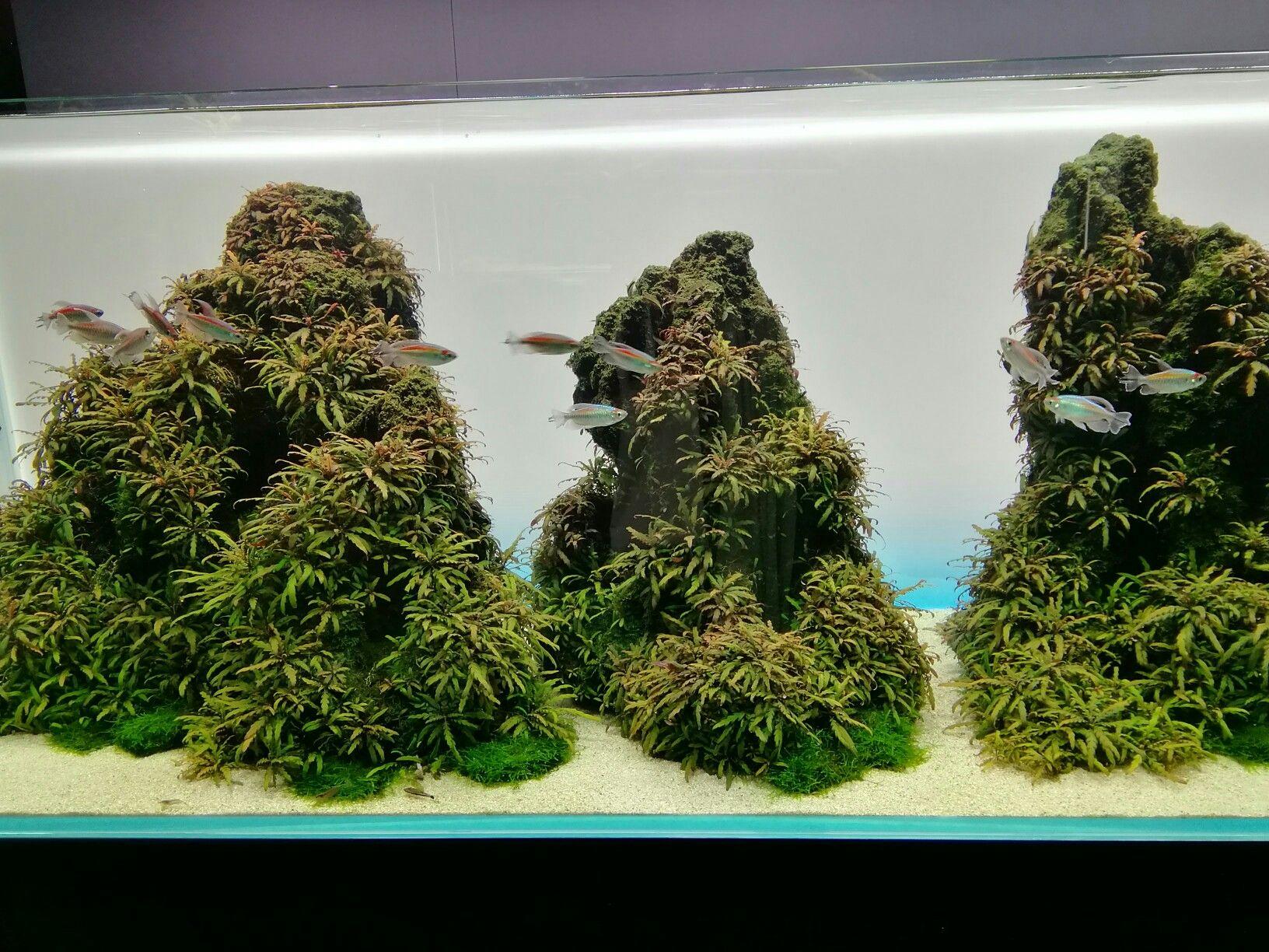 Nature aquariumtakashi amano 天野尚 peceras in pinterest