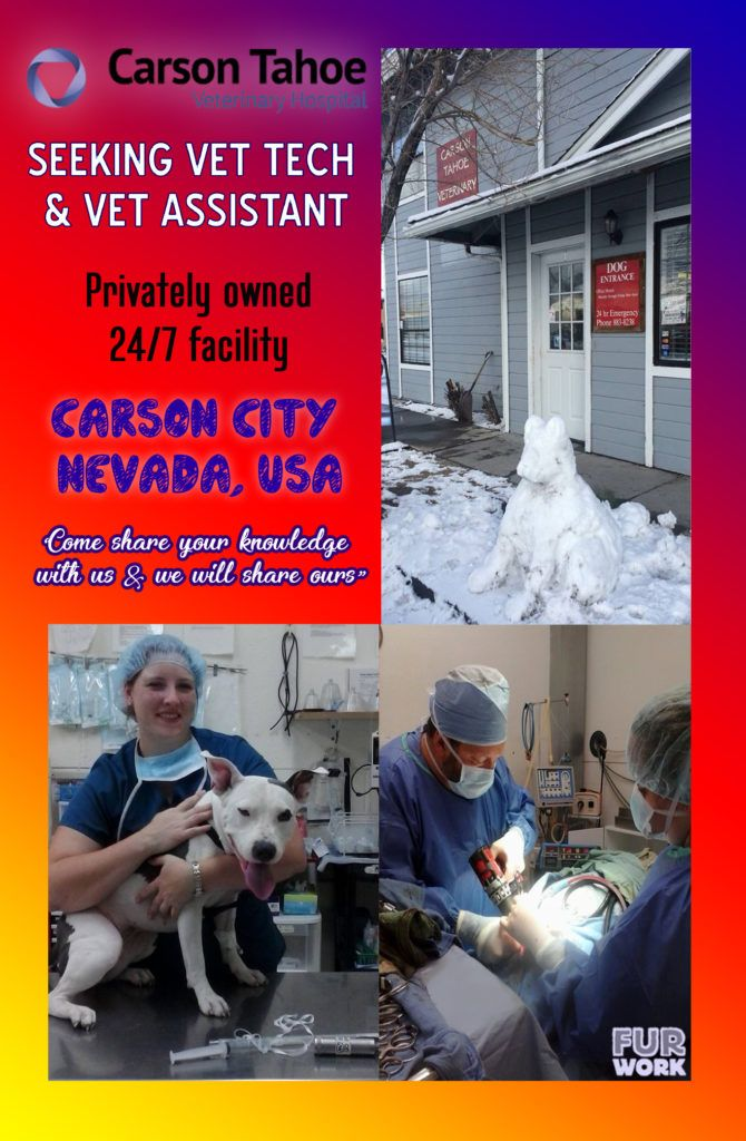 Licensed Veterinary Technician & Vet Assistant, Carson