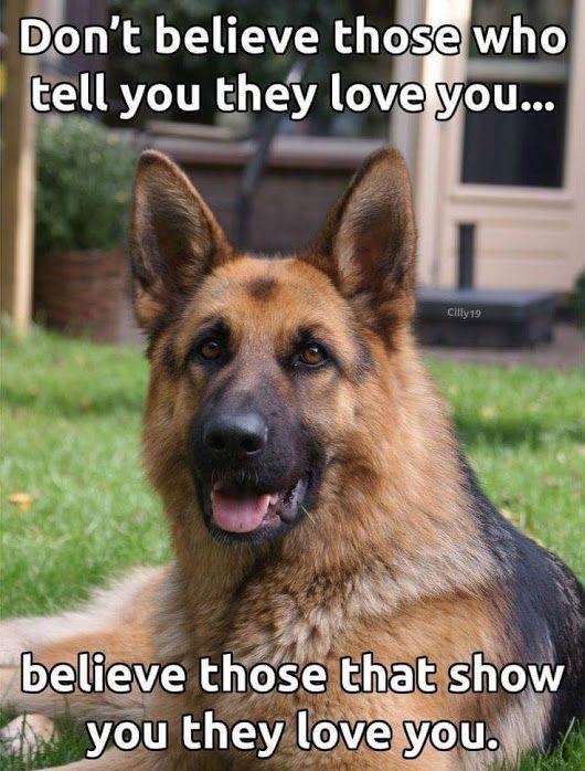 The German Shepherd German Shepherd Quotes Dog Quotes Shepherd Dog