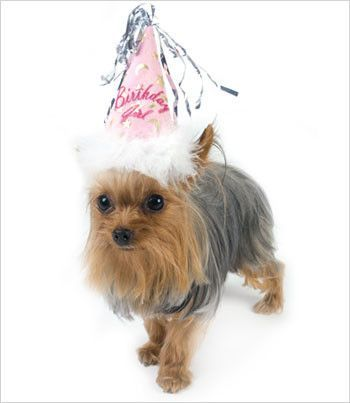 Small Dogs Rejoice Our Plush Birthday Hat Is Soft And Made For The Dog Head Featuring Fun Silver Streamers Comfort Chin Strap White Feather