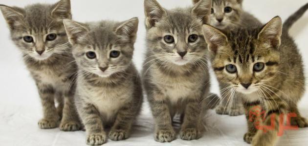 تفسير رؤية القطط في المنام والخوف منها In 2020 Cats Animals