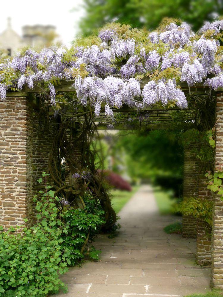 Rankhilfe Blauregen Kletterpflanze Garten Pergola Mauer Garten