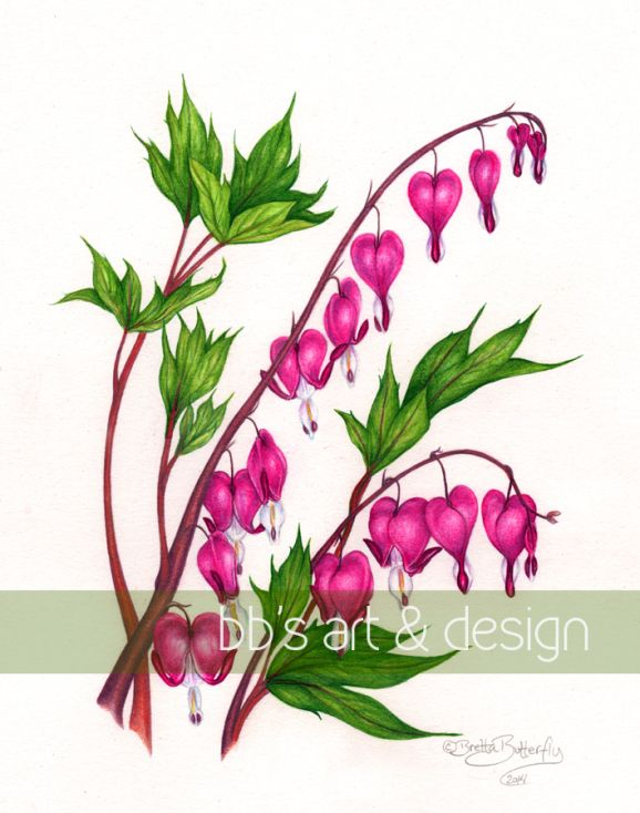 Bleeding Hearts Final Floral Drawing Flower Drawing Flower Painting