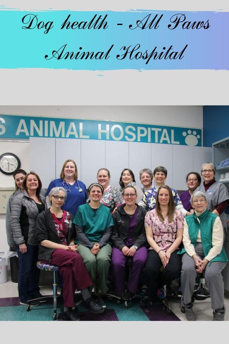 All paws animal hospital animal hospital dog health