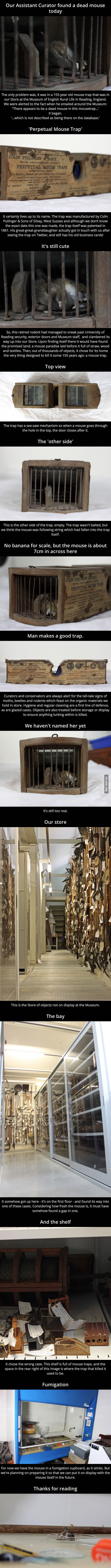 A mouse has died inside a 155-year-old mousetrap in a museum - 9GAG
