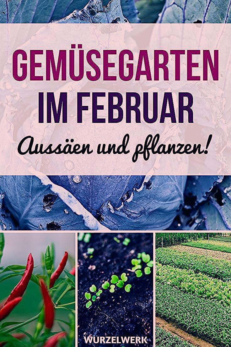 Photo of Aussaat & Pflanzen im Februar + Beispiel-Gartenplan – Wurzelwerk