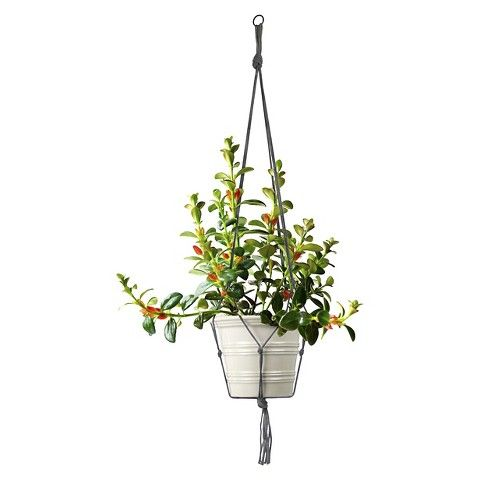 Plastec Plant Hanger Grey  Target. This May Help With The Cat Eating My  Plants