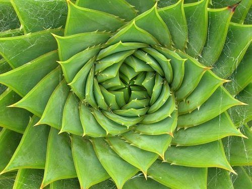 Sciencesoup The Mathematics Of Beauty The Spirals In Nature