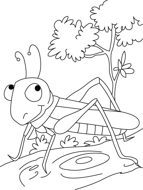 Grasshopper Coloring Pages For Kids Preschool And Kindergarten