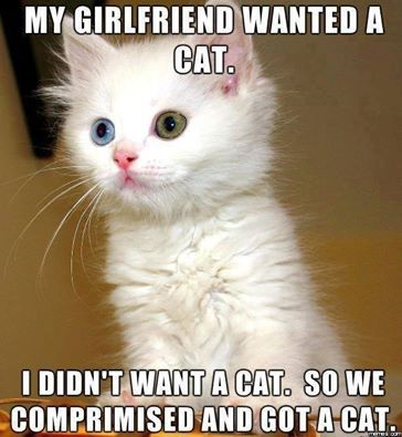 Compromised Aww I Have An Odd Eyed White Cat Too Funny Cat Memes Gorgeous Cats Funny Cats