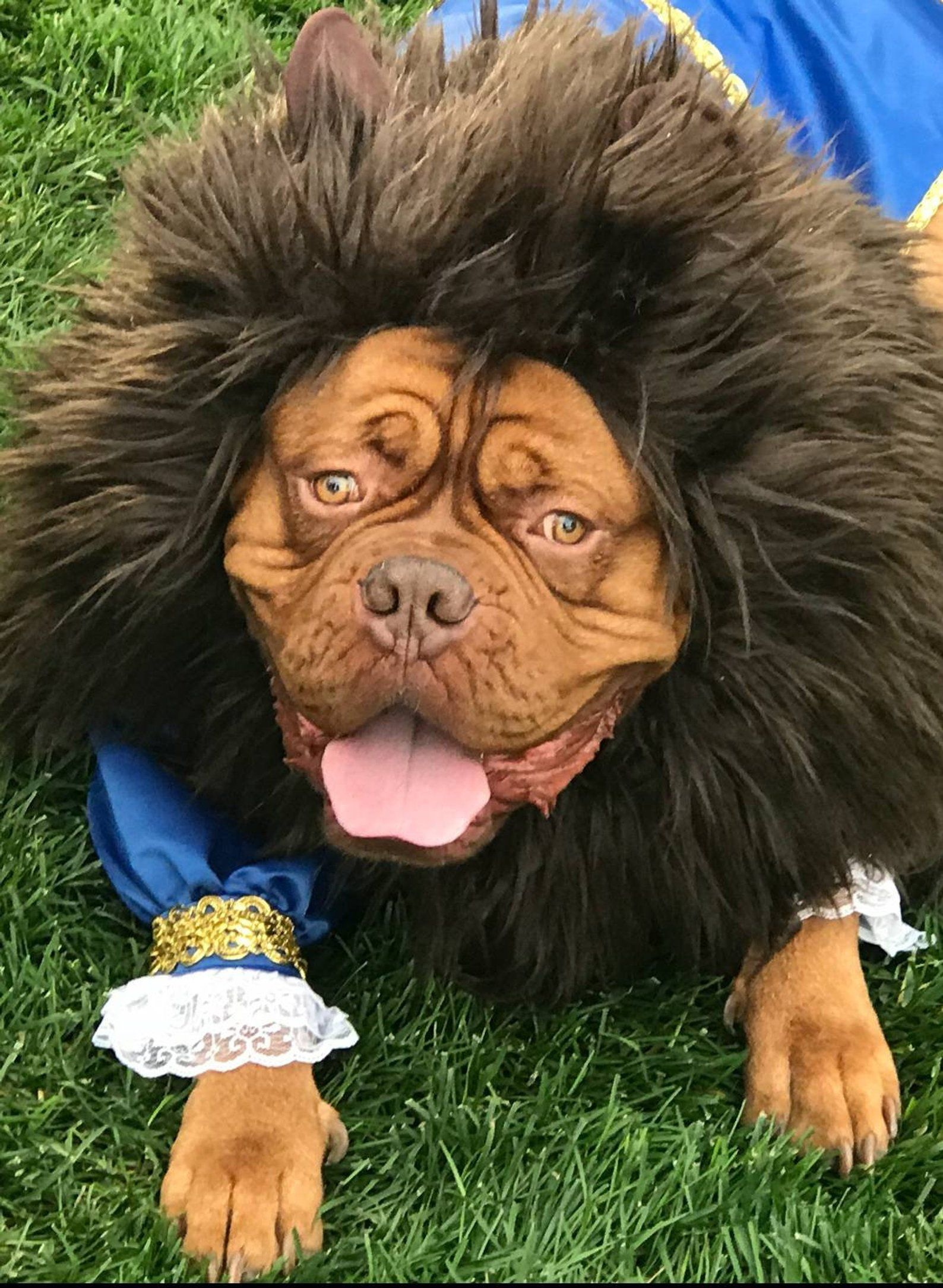 Inspiration Accessories For Your Diy Dog Halloween Costume Idea