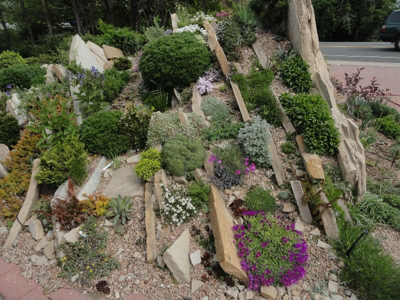 Lieblings Bildergebnis für alpinum anlegen | Alpinum | Steingarten, Garten &TY_03