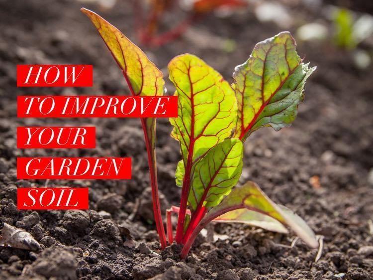 Consistent Nutrient Rich Soil Is Every Gardener S Dream Too Often We Are Stuck With What We Have Or Vegetable Garden Soil Garden Soil Preparation Garden Soil