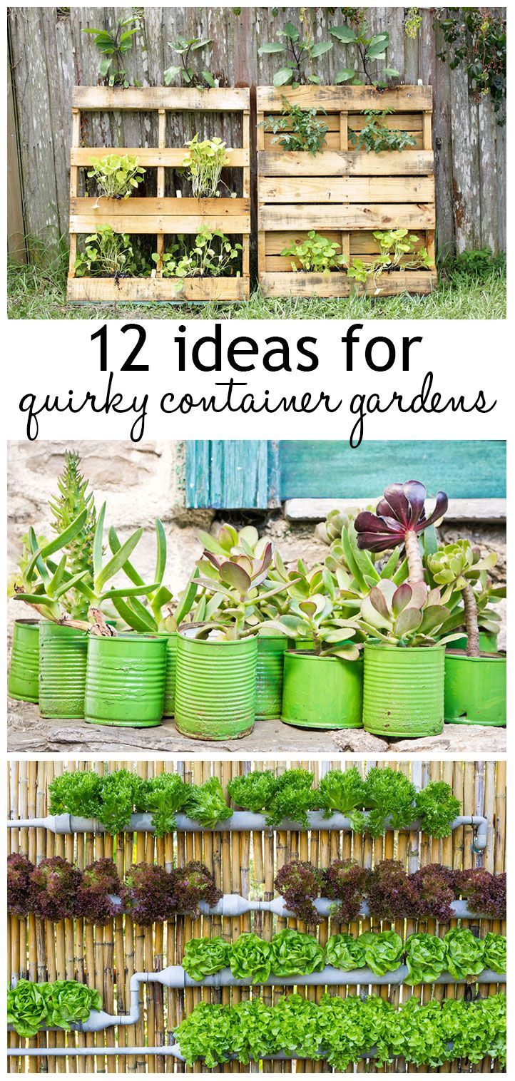 Fancy container gardens and recycled containers - create a stunning urban garden with unusual containers
