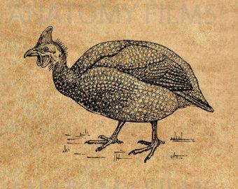 Clipart clip art t l chargement imm diat la pintade gibier plumes poules paons etc - Dessin pintade ...
