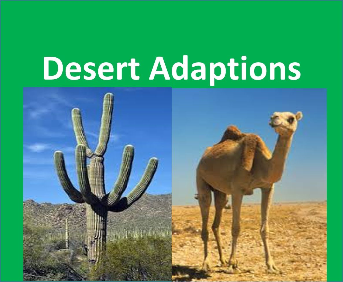 Youtube Animal Adaptations Desert Animals Adaptations Desert Animals