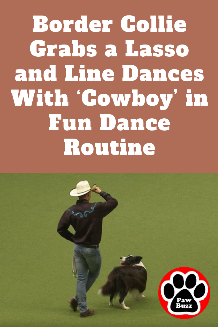 Upcoming Events — Polka for the Pets — Humane Society of ... |Dog Line Dance