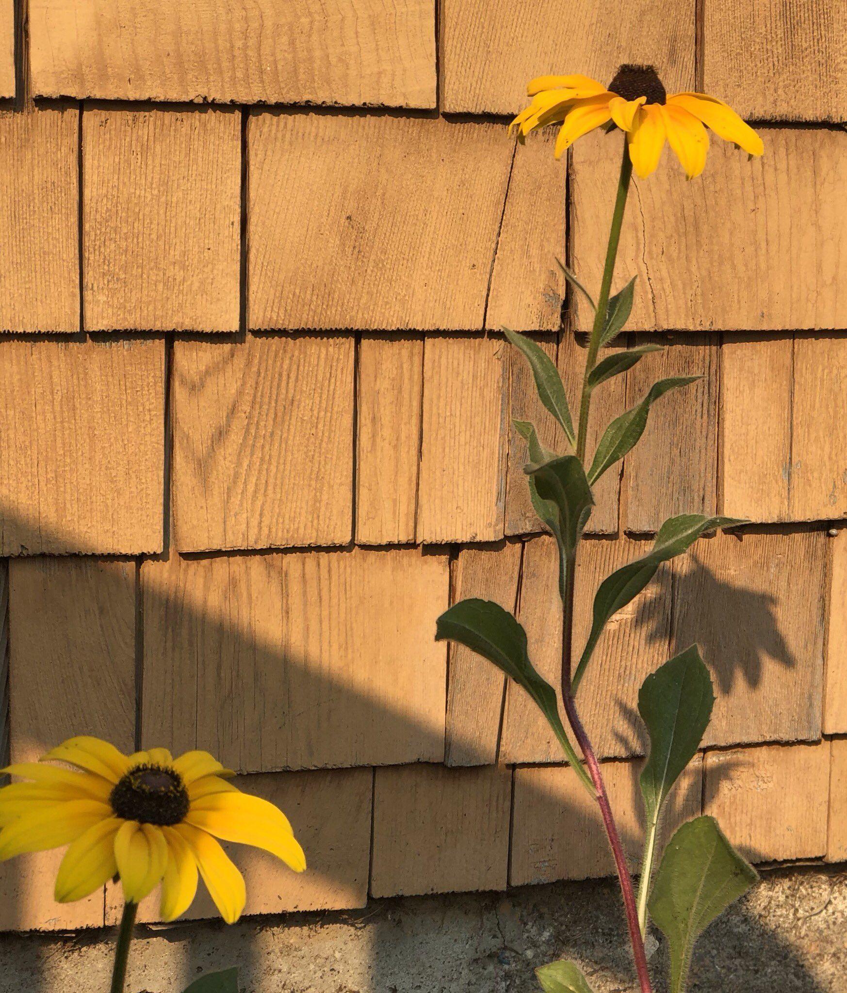Kristen Vartan On Plants Red Sun Garden