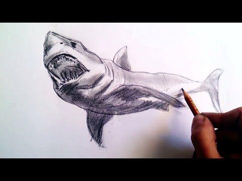 Dibujos De Tiburones A Lapiz En 3d