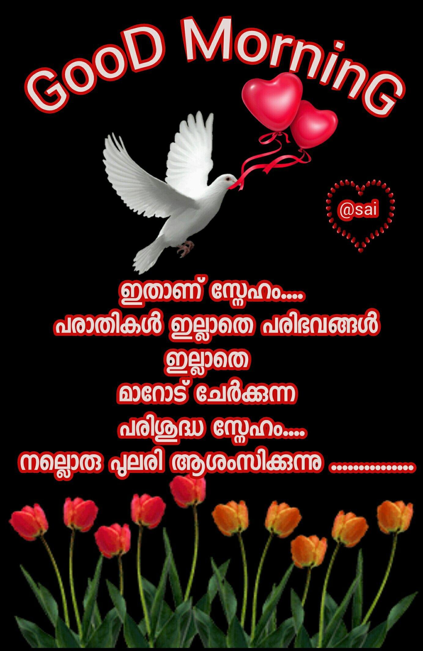 Hai My Dear Molu Morning greetings quotes, Good morning