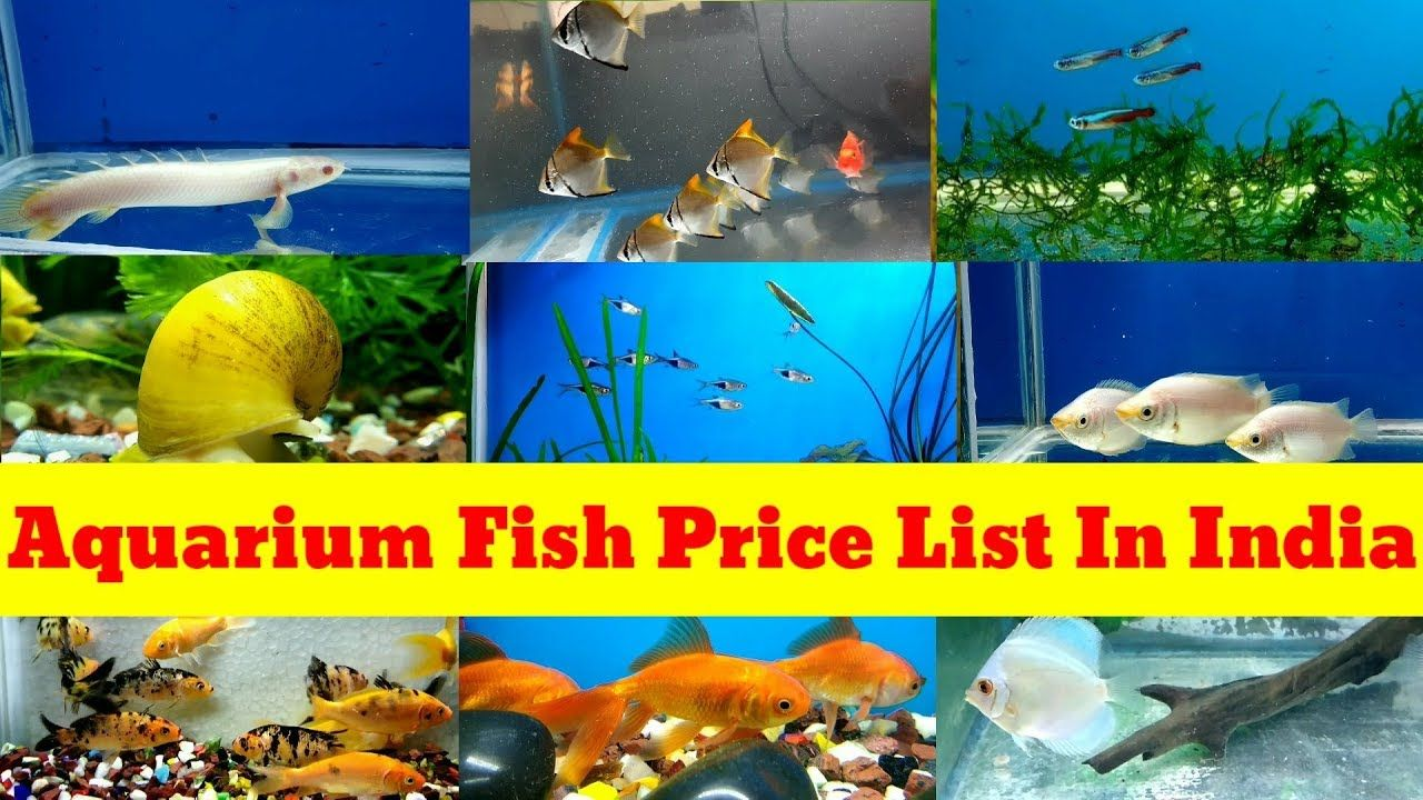 Pin By Aquaplanets On Aquarium Fish In 2020 Aquarium Fish Fish Aquarium