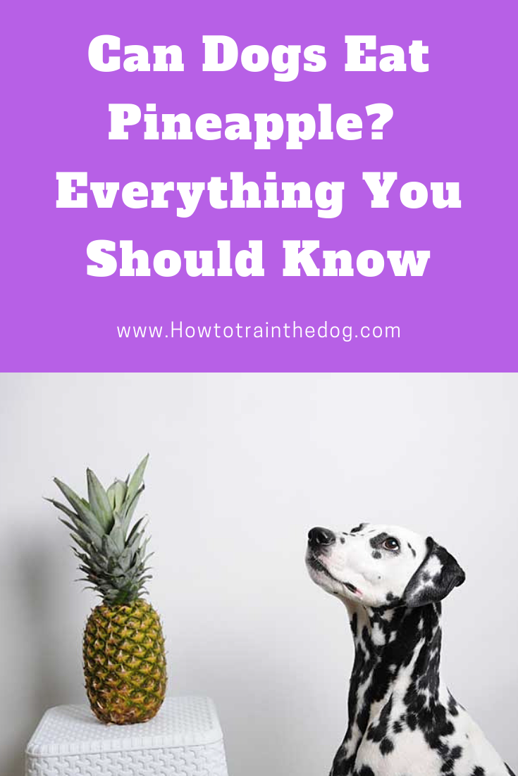 Can Dogs Eat Pineapple? Your Complete Guide to Safely