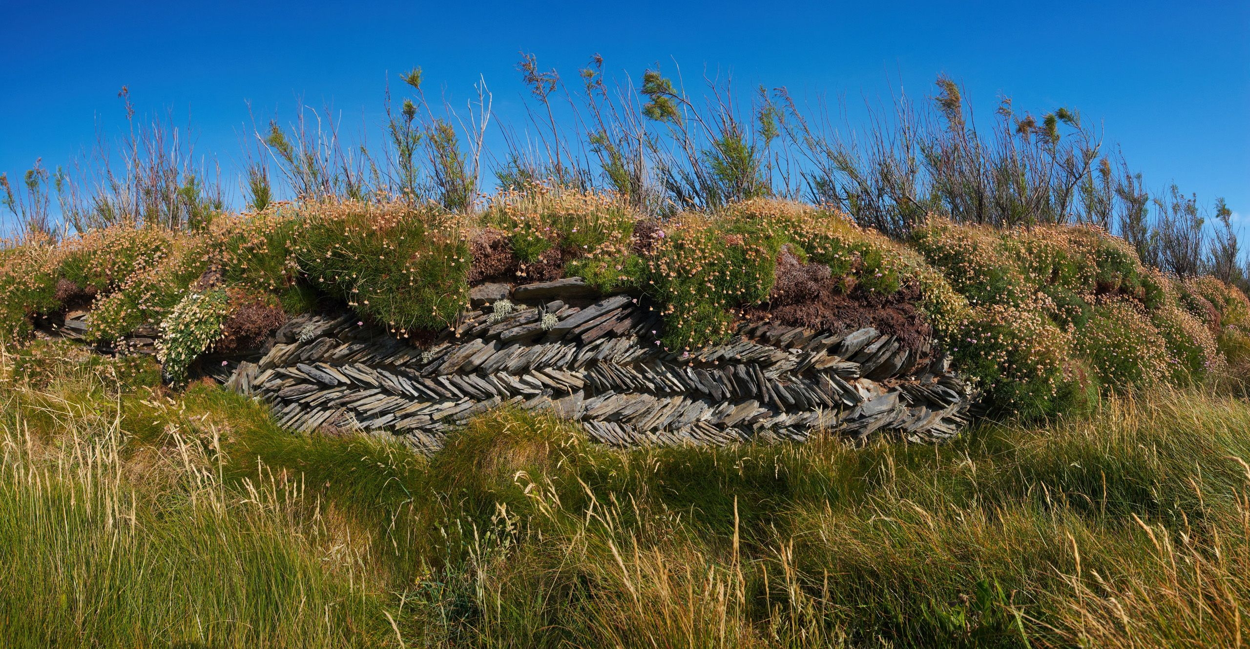 overgrown-wall-pano-4.jpg (2560×1330)