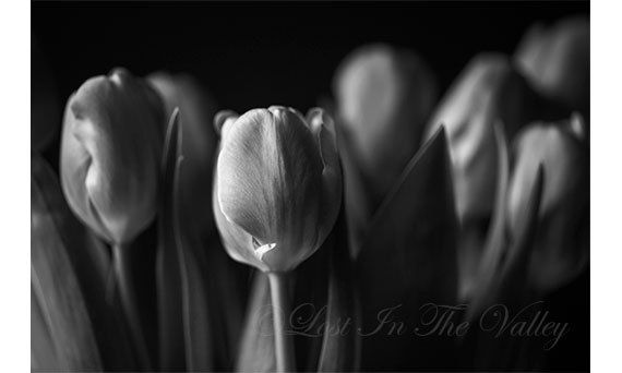 A photograph of a bouquet of tulips for your farmhouse decor. This black and white print has moody grey tones and lots of lovely bokeh!