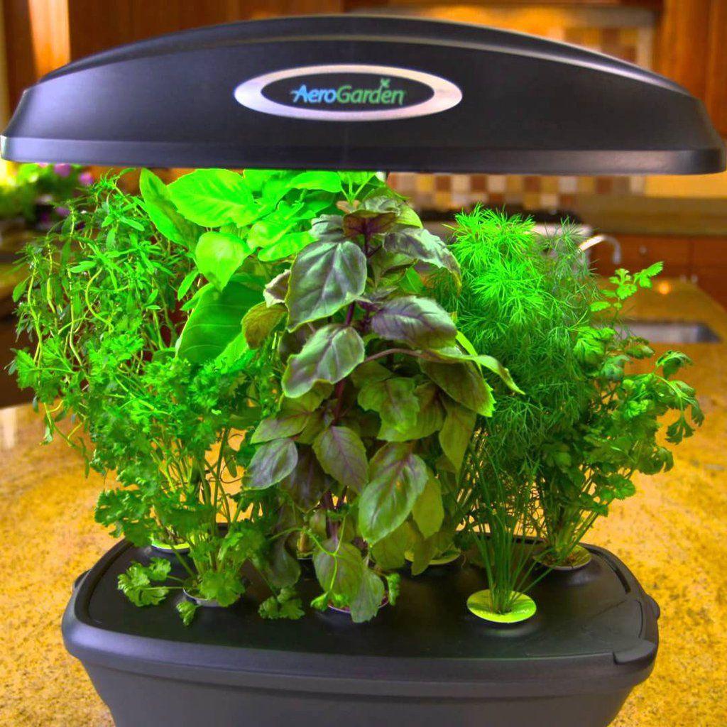 Aerogarden Ultra Herbs Indoors Hydroponic Gardening Herbs 400 x 300