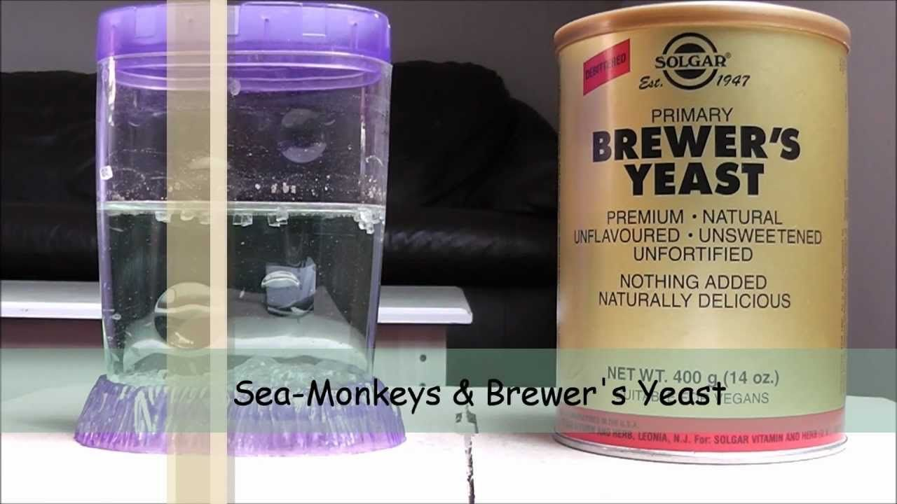 Sea Monkeys Brewer S Yeast Monkey Food Brewers Yeast Sea Monkeys
