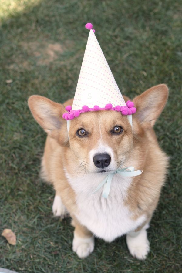 August 1st Is Marked Dogust The 1st The Universal Birthday For All Rescue Shelterdogs Happybirthday Canines Dogs Dog Day Afternoon Corgi Dog
