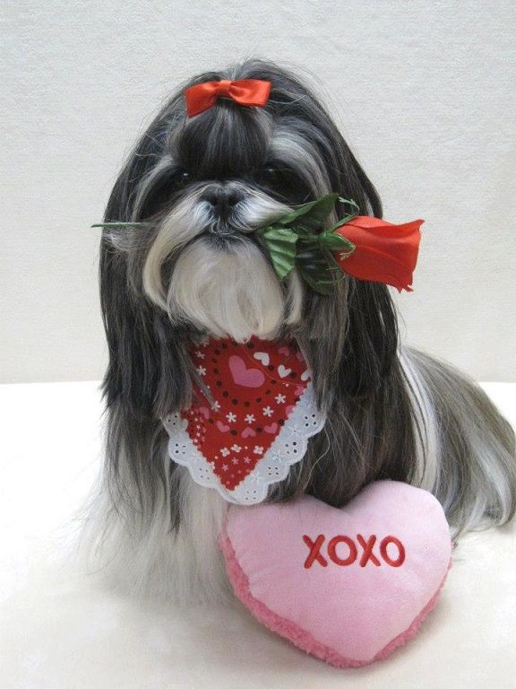 Valentine S Day Musings Cards Dogs Handguns And More Shih
