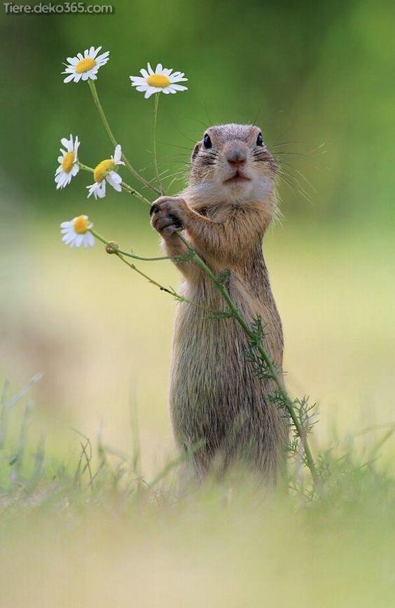 Unglaubliche Niedliche Tierbilder, die Ihren Tag zeugen #cutecreatures