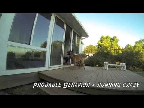 Dog Training And Premack Principle Fence Fighting Youtube