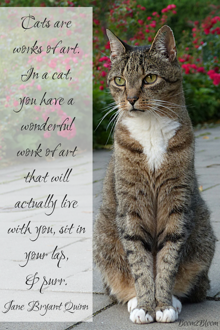 Purrfectly Pawsitive 50 Cat Quotes Kitten quotes, Cat
