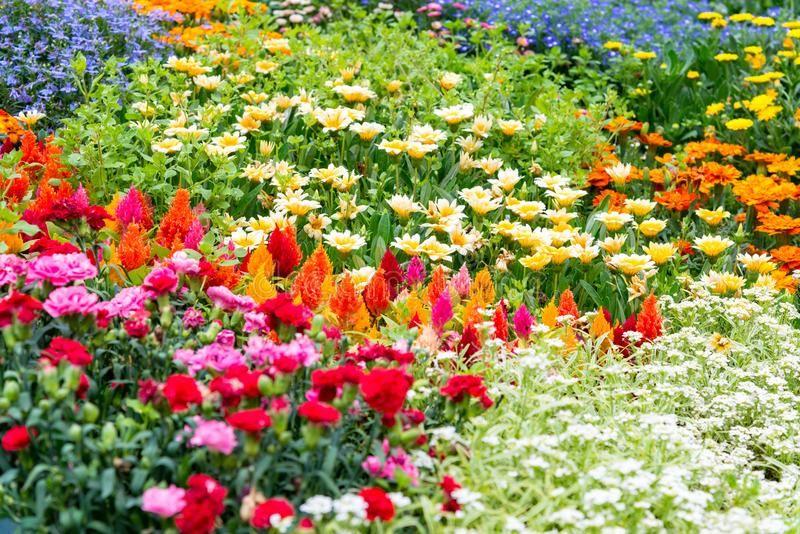 Se gosta de floricultura, então este é o artigo certo para si. Mesmo nesta época fria do ano, quem gosta